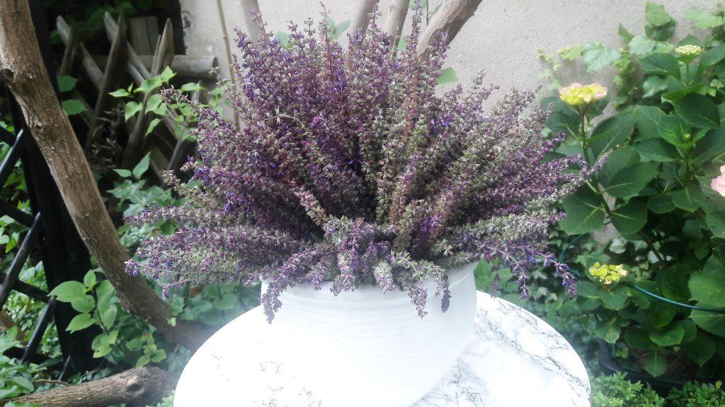 lila Sommersalbei im Garten-in einer Vase auf rundem Tisch