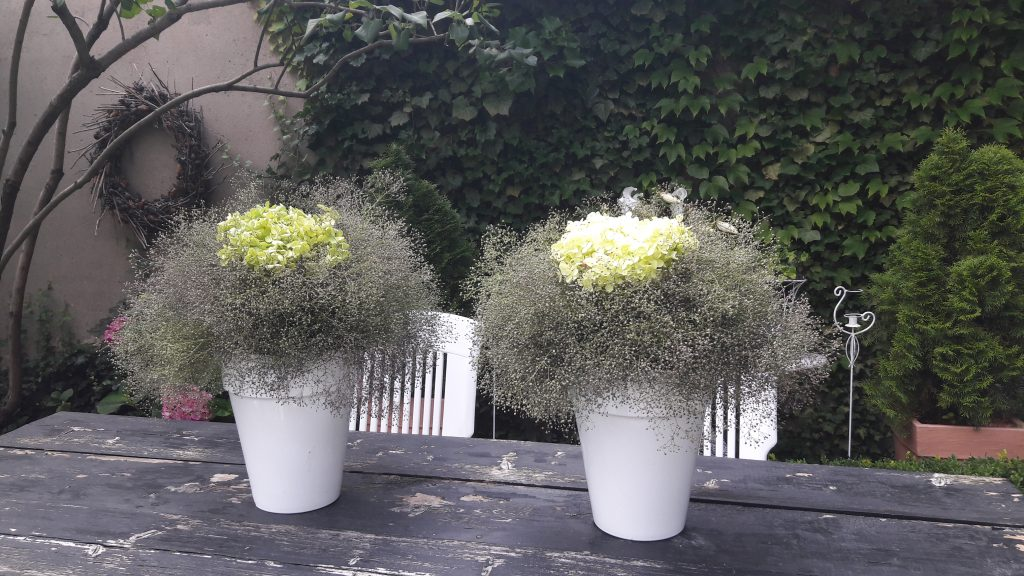 weiss blühendes Schleierkraut – in zwei Blumensträussen mit Hortensien auf Gartentisch