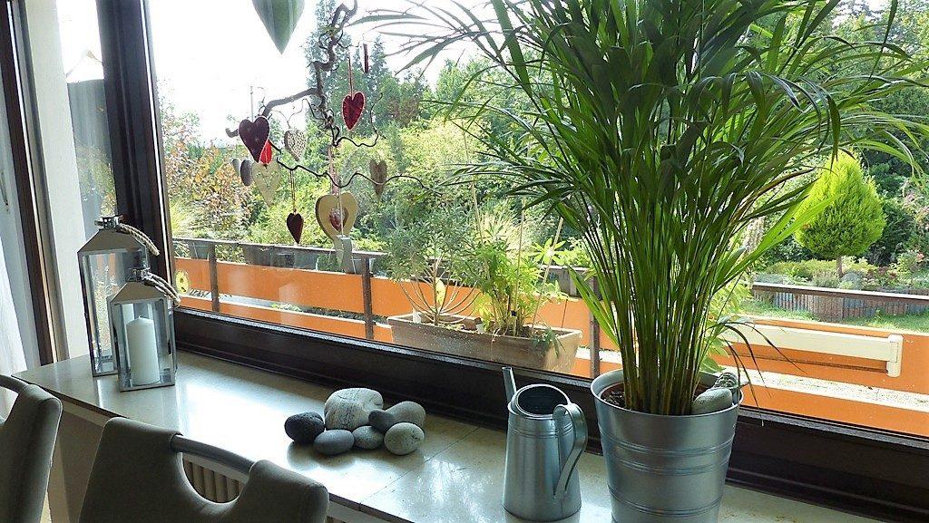 Internet-Wohnzimmer-nachher mit einer Topf-Pflanze und wenigen Dekoelementen