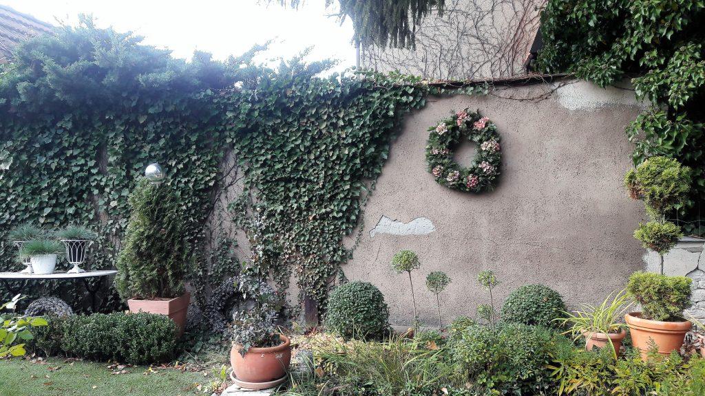 Kranz aus Hortensien, Tanne und Efeu an grauer Gartenmauer mit Efeubewuchs