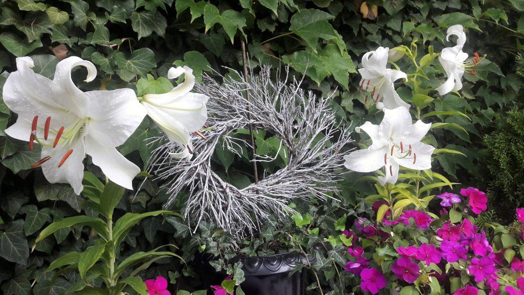 Kränze aus Lavendel-Zweigen: Einer zwischen Blüten und Wildem Wein