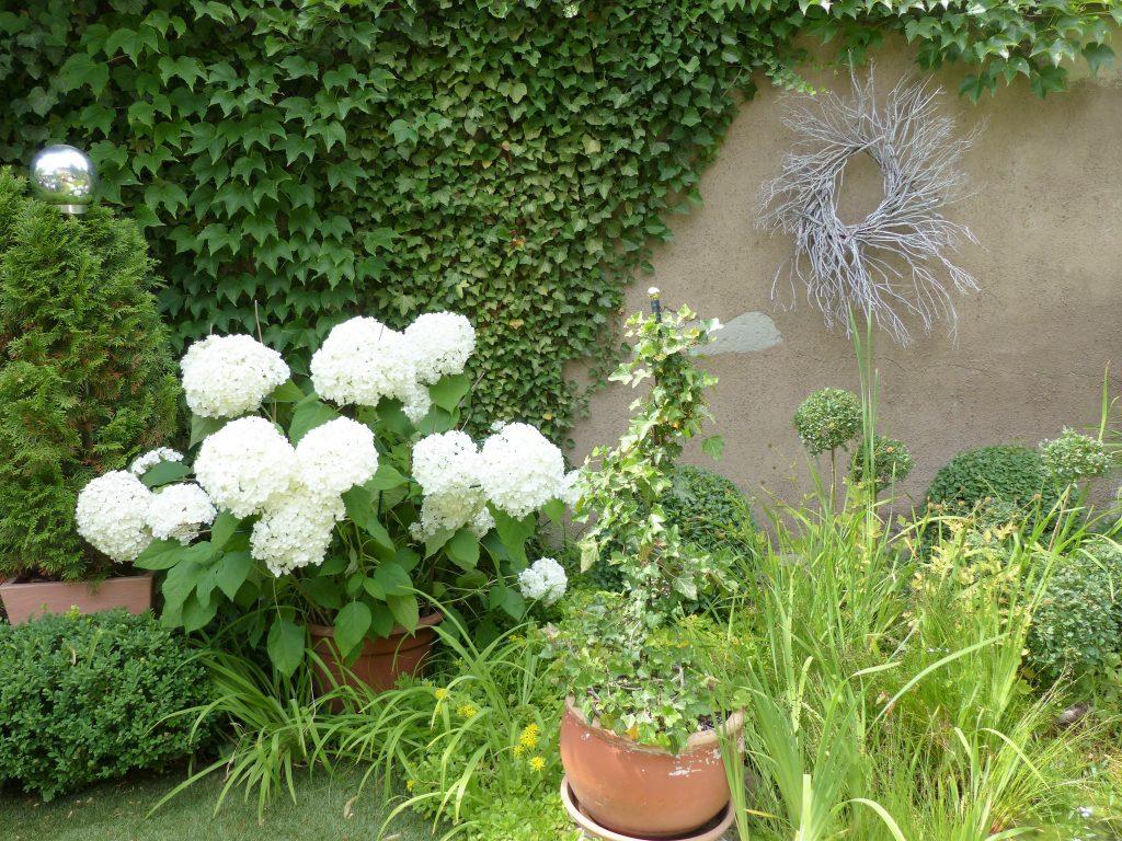 Kränze aus Lavendel-Zweigen: Einer an der Efeu-Wand hinter weißen Hortensien
