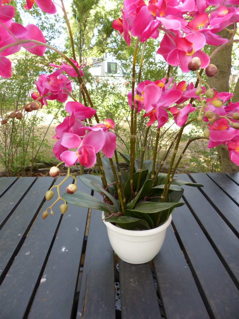 pinke Orchidee Material Topf mit Orchideen