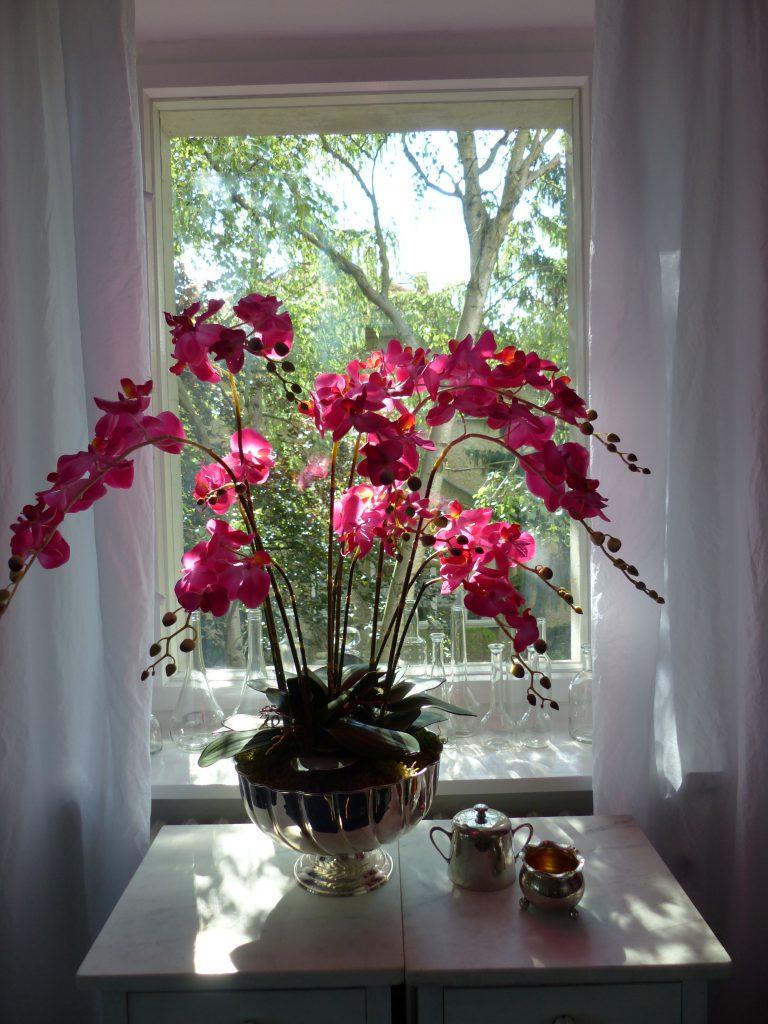 pinke Orchidee Fertig vor dem Fenster