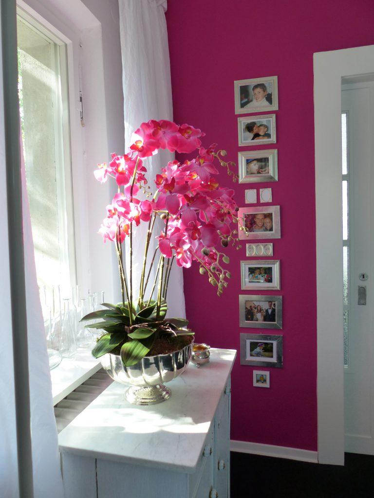 pinke Orchidee Fertig vor pinker Wand