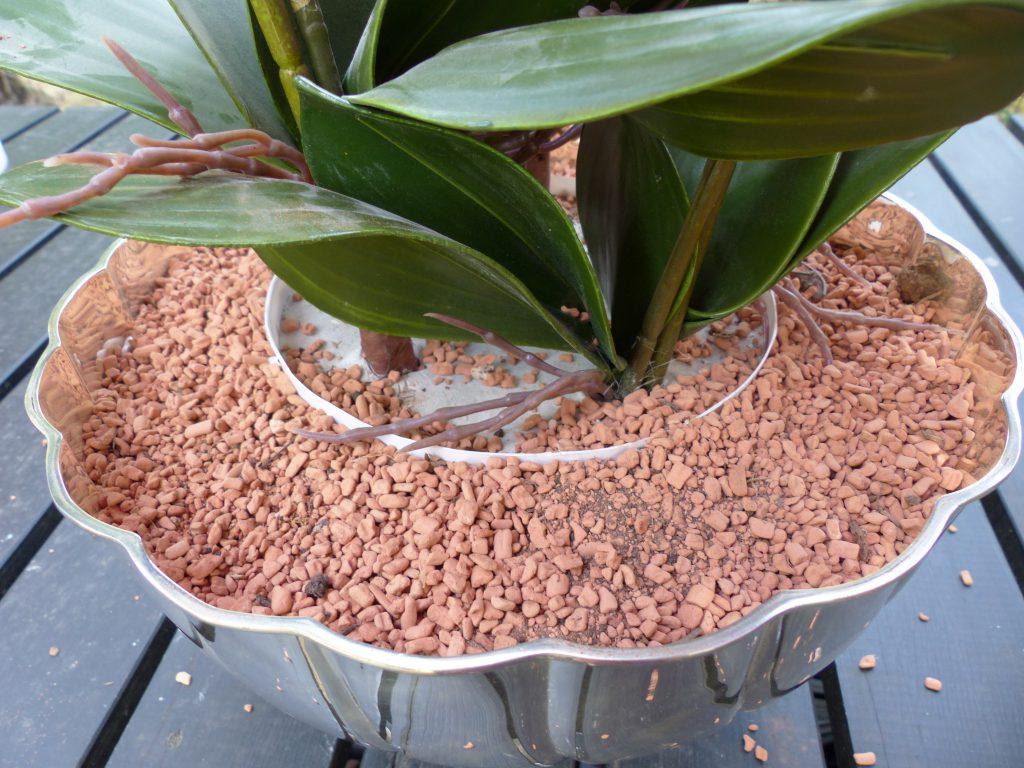 pinke Orchidee inArbeit Sand auffüllen