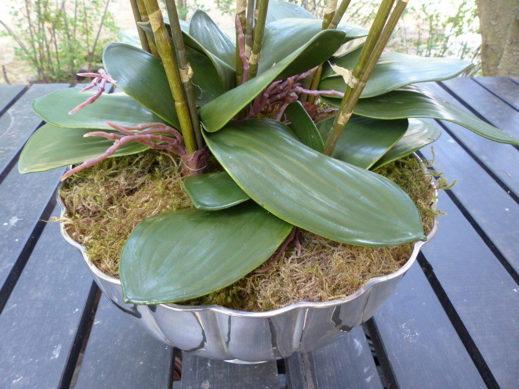 pinke Orchidee inArbeit mit Moos abdecken